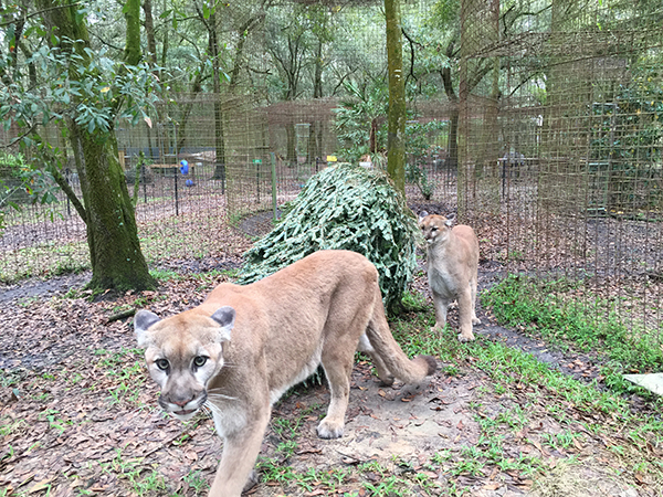 Volunteers-Christmas-Tree-Enrichment_2844