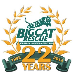 22 Years Saving Big Cats