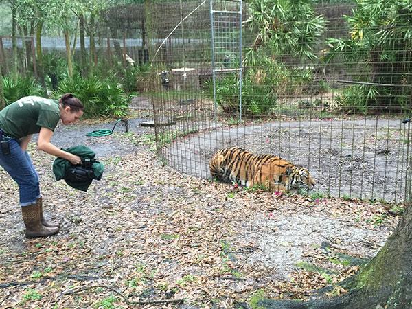 Keisha-Zeus-Tigers_3079