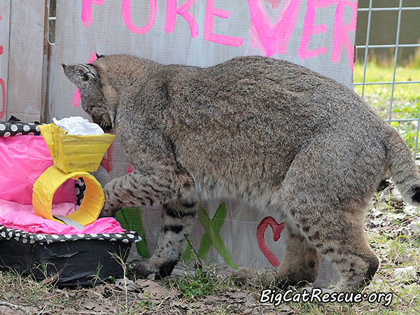 Valentine15_MaxMary026-FB