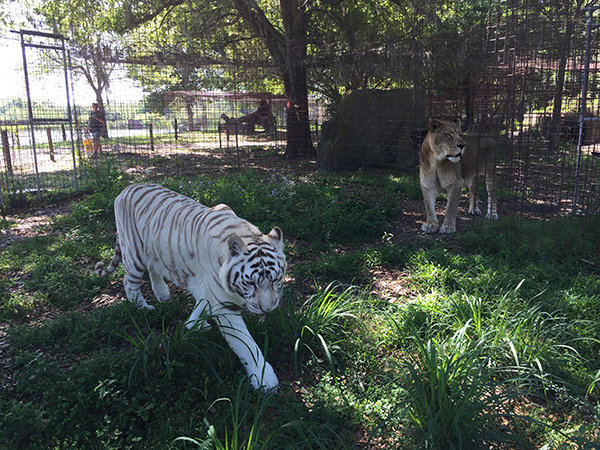 Cameron and Zabu get enrichment