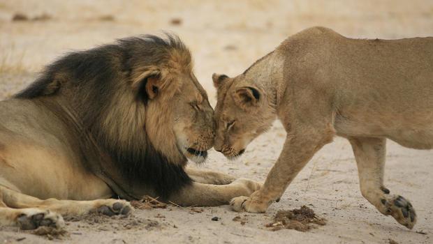 Cecil Pride