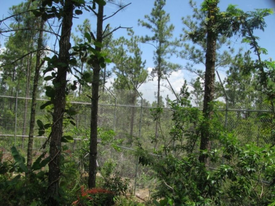 mistletoe and ladyhill habitat july