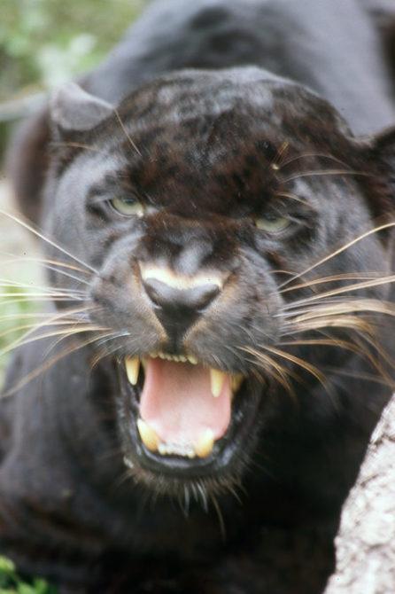 Leopard-Will-Rhoades
