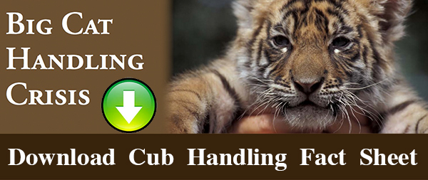 Download Cub Handling Factsheet