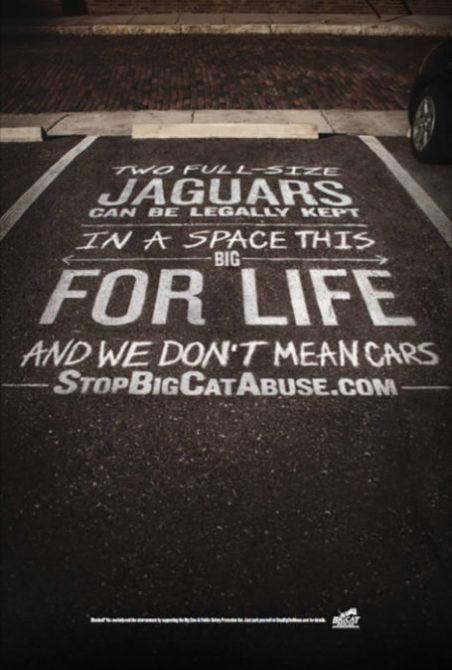 Jaguar Parking Michael Schillig