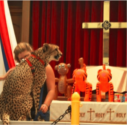 cheetah in church