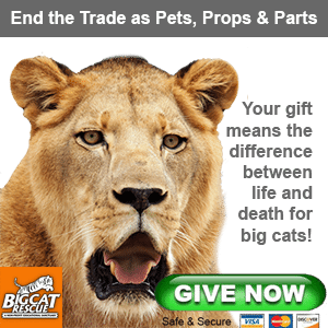 Donate to Big Cat Rescue