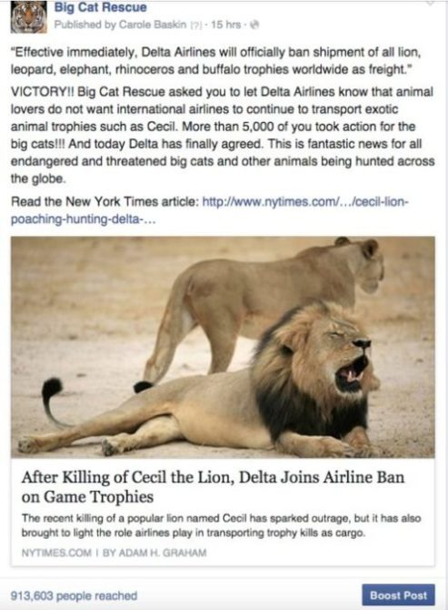 Delta bans lion trophy shipments