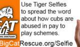 Tiger Selfie Challenge