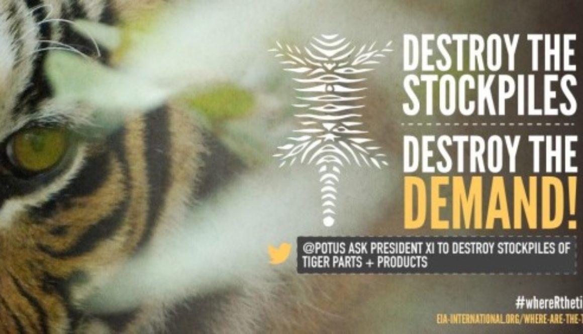 POTUS XI Tiger Talk