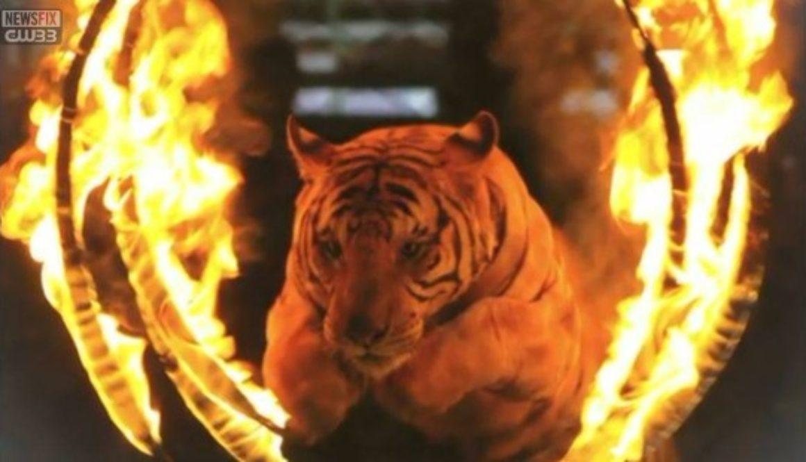 Shriner Circus Tigers