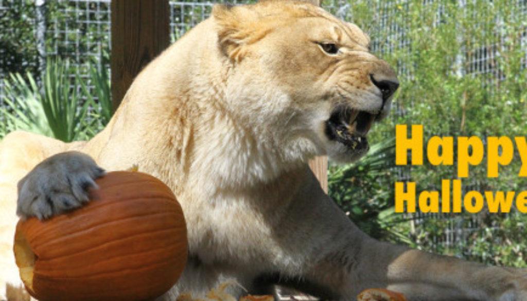 Happy Halloween NikitaGrowl2015