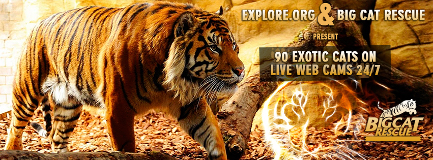 Explore-facebook_cover