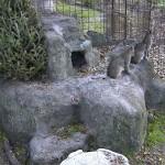 Bobcat Calls