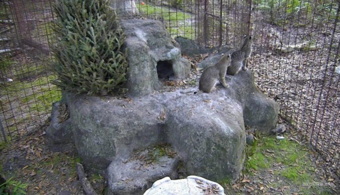 Rehab-Bobcat-Kittens-019773073