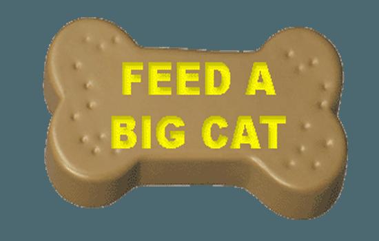 feedabigcat