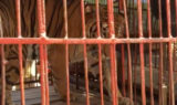 Hoover in circus cage up jpg