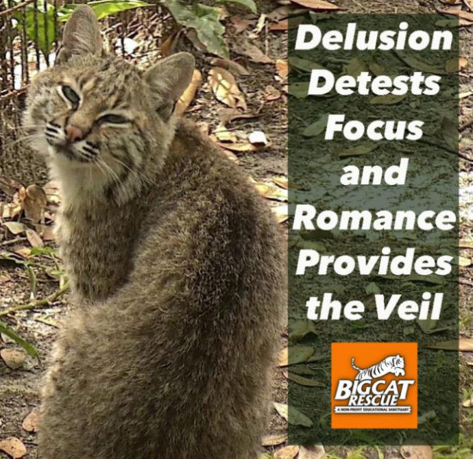 Bobcat Delusion