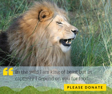 Donate to Feed Lions