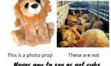 Lion Photo Props