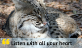 Listen With All Your Heart