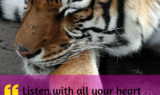 Listen With All Your Heart-Tiger