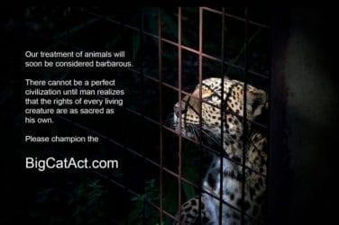 Big Cat Bans Enacted