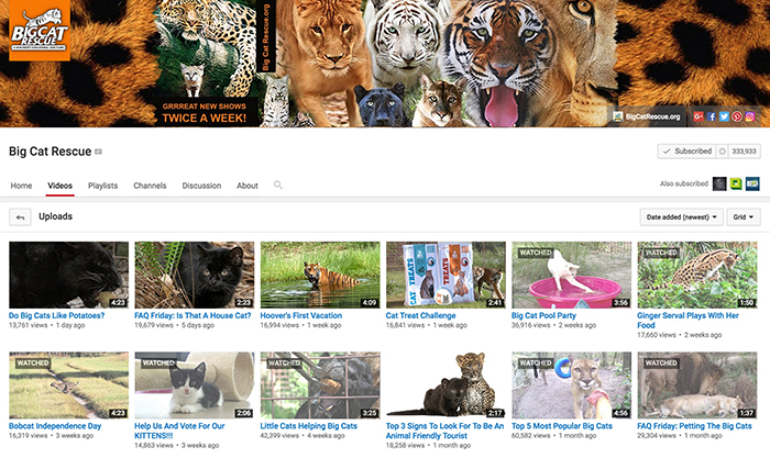 You Tube Big Cats July 2016