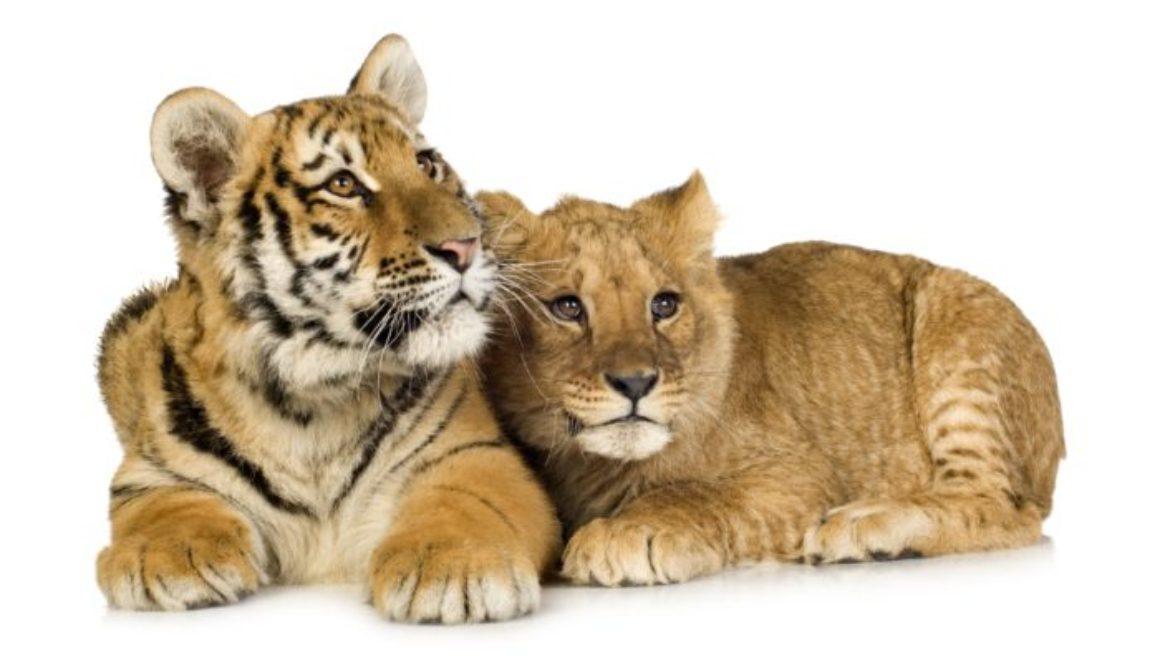 Ban cub pimping