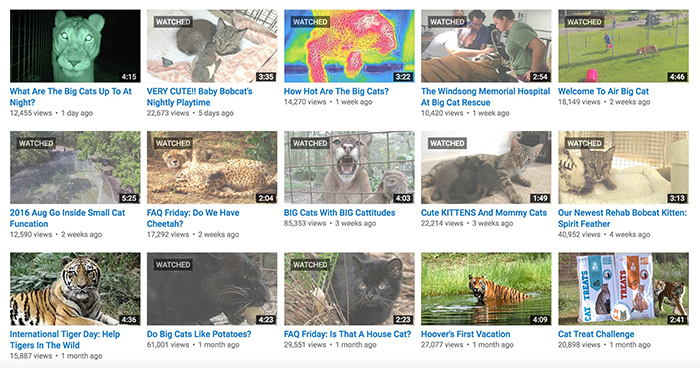 YouTube Videos of cats