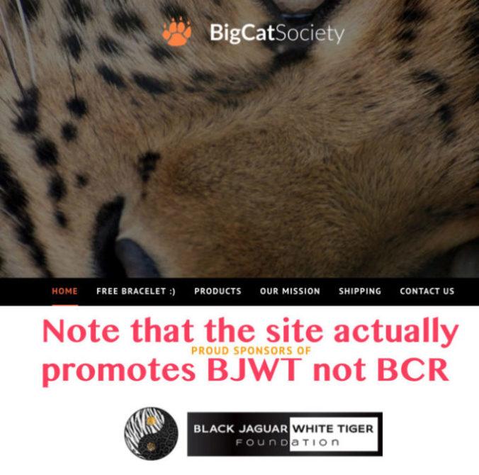 big cat society bjwt