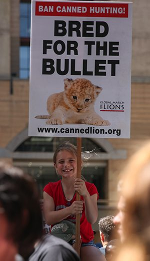 cites canned lion
