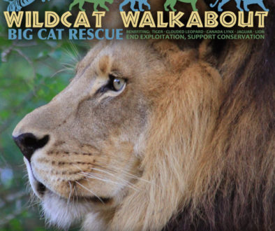 wildcat walkabout