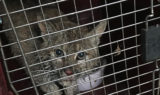 Dryden Bobcat