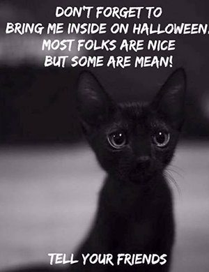 halloween-black-kitten-mean