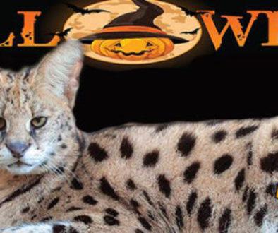 halloween serval banner