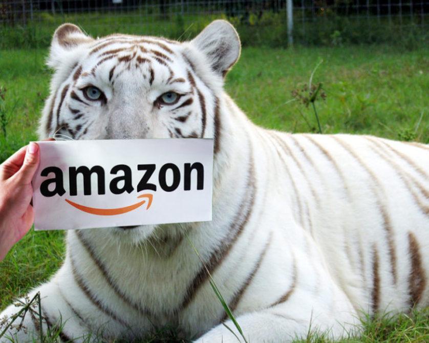 amazon smile-zabu white tiger