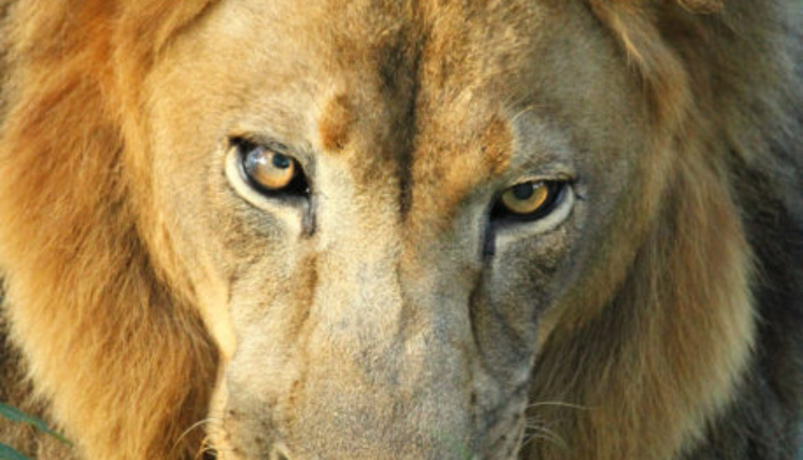 Photo of the Day - Joseph Lion Photo