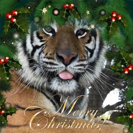 merry christmas priya tiger Jamie Sudberry