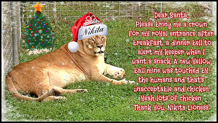 nikita lion christmas list