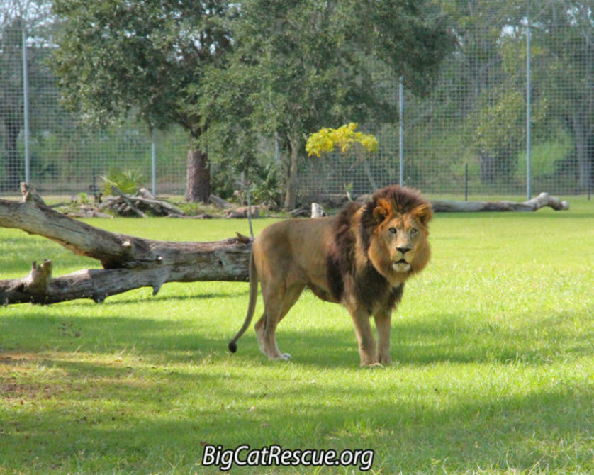 Jan 14 2017 | Big Cat Rescue