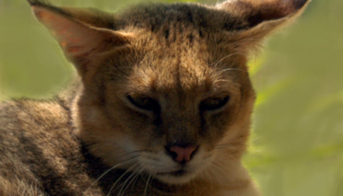 Thunder Jungle Cat