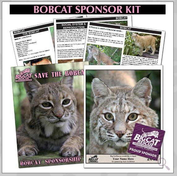 Bobcat Sponsor Kit