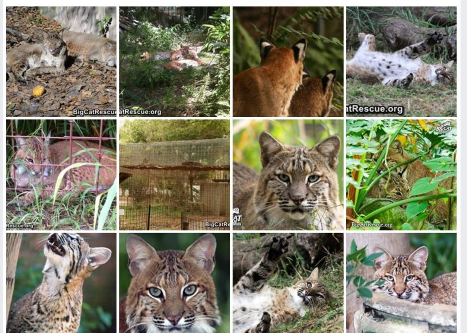 Moses Bobcat Photo Album