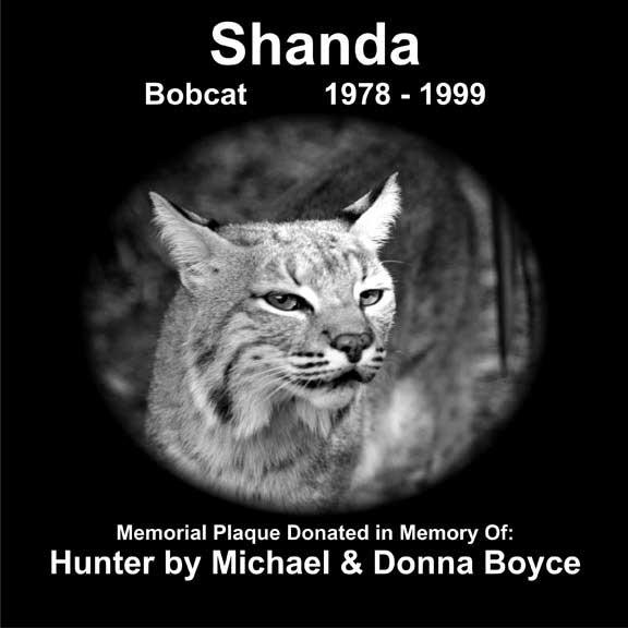 Shanda Bobcat