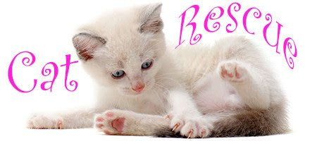 beautiful playing siamese kitten in front of white background