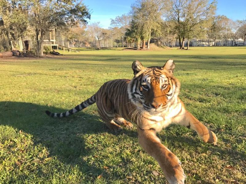 priya tiger having fun