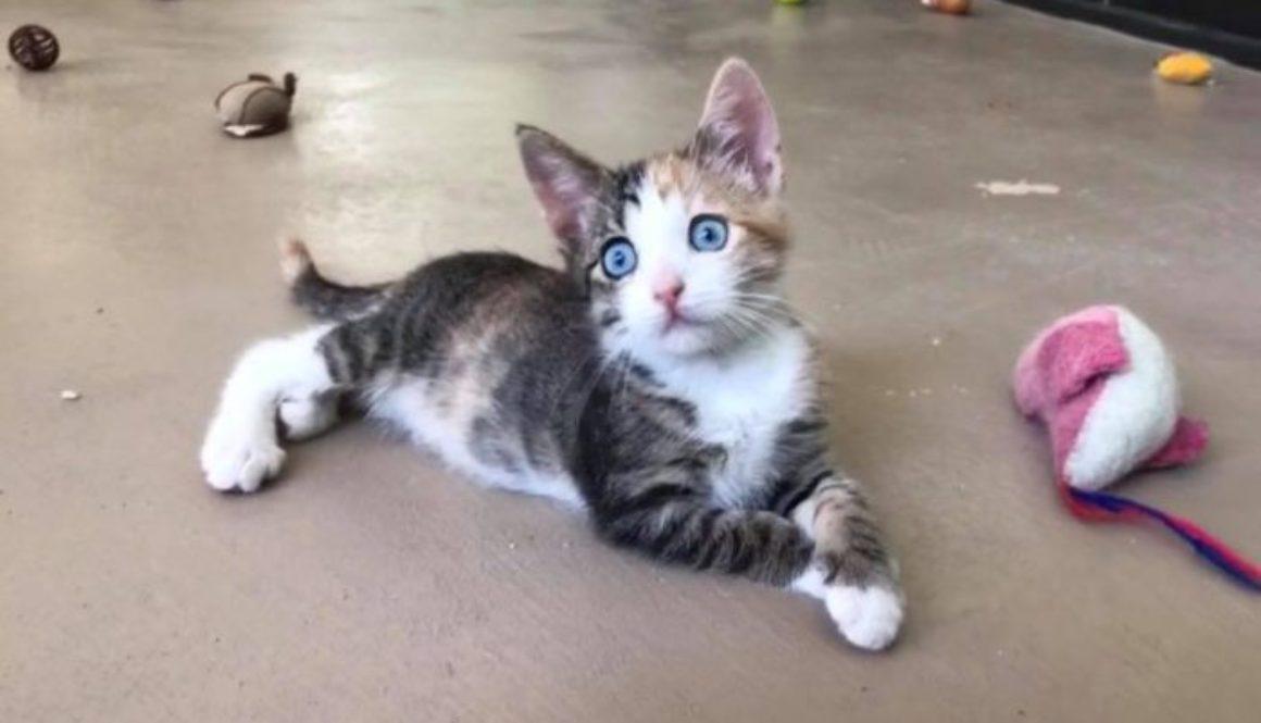 Big Cat Rescue Center Brazil Indiana