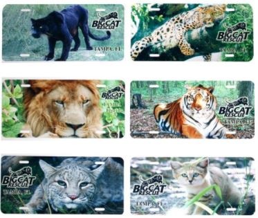 Auto Plate - Big Cat Photo Vanity Plate $8.00 Show your support for BCR with these vanity auto plates featuring your favorite cat. Wild Cat License Plates feature felines residing at Big Cat Rescue. Choose Sabre the Black Leopard, Simba the Leopard, Joseph the Lion, Shere Khan the Tiger, Windstar the Bobcat or Genie the Sand Cat. Each is a standard sized collector license plate that is made of an aluminum type metal with pre-cut bolt holes.